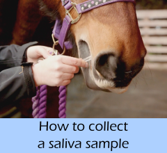 How_to_collect_a_saliva_sample_A