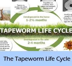 The_Tapeworm_lifecycle