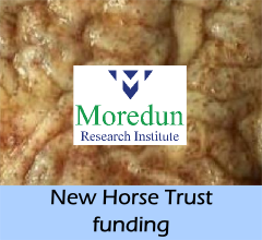 news-new_horse_trust_funding